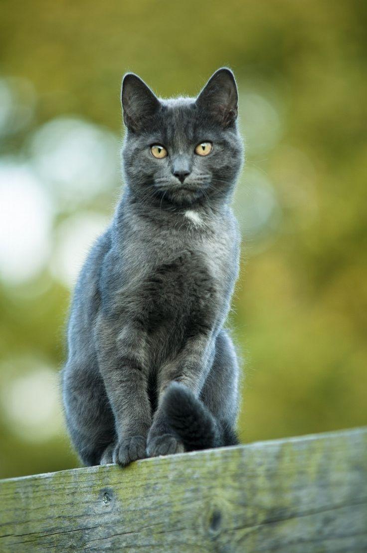 64 best Cat images on Pinterest