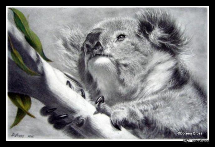 Koala in graphite