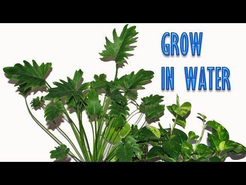 Best 25 best indoor plants ideas on pinterest indoor for Low water indoor plants