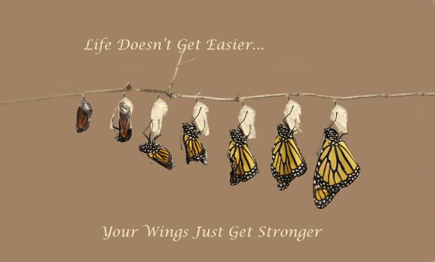 Inspirational Photo and Quote- Life Doesn't Get Easier...Your Wings Just Get Stronger. Butterfly Photography by Monte Loomis.
