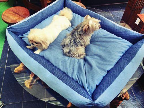 80 X 110 cm  Köpek Yatağı Köpek Minderi BLUE DOG BED - KÖPEK YATAKLARI Mavi Köpek Minderi - Köpek Yatağı http://kemique.com/page.php?id=26