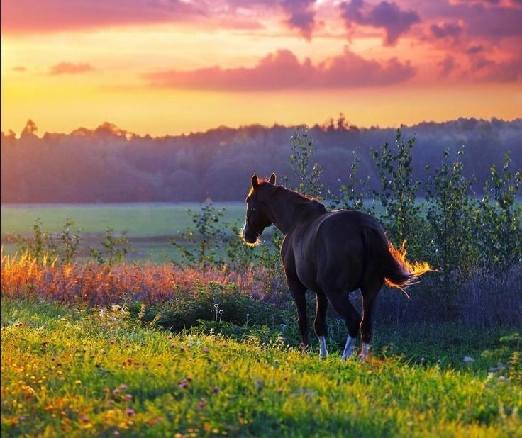 Serene sunset horse photo, love the colors and the way the light falls