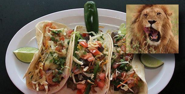 lion-tacos.jpg (607×310)
