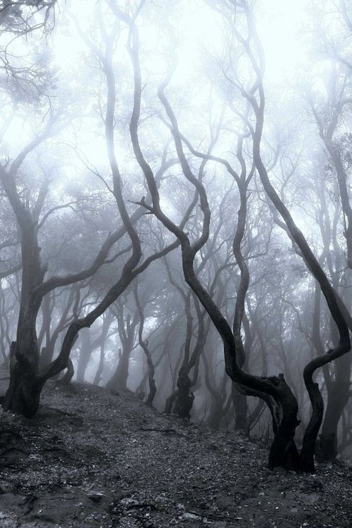 Trees in Enchanted Woods.
