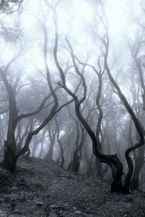 Темный лес Fdce9c0468faa146de54c7a6b42cb991