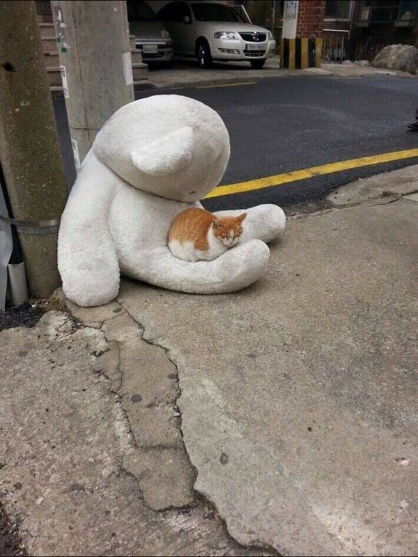 This is kind of sad, this kitty looks homeless. At least it found some warmth.