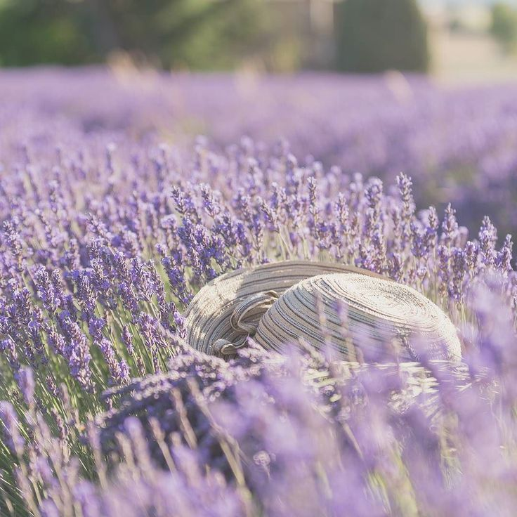Throwback to the beginning of the summer with the beautiful lavenderfields flowering. Do you also miss the sunshine already ? #myholidaysinprovence