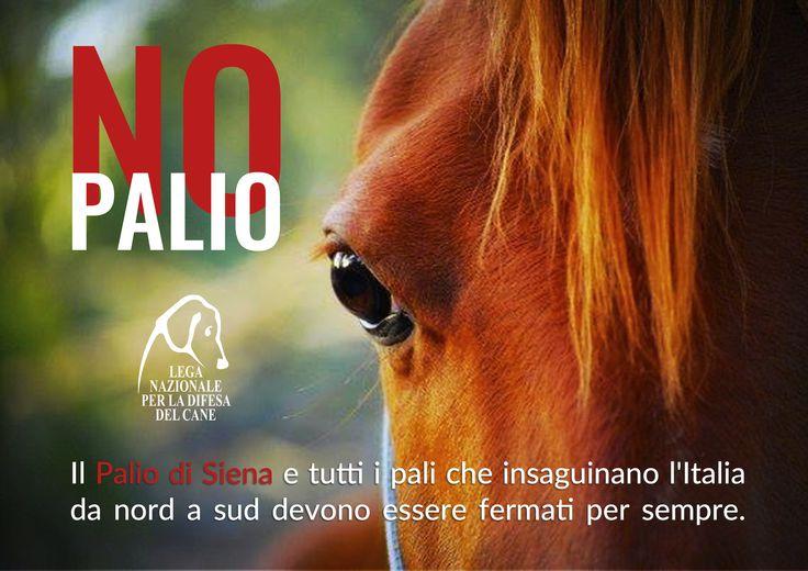 #mailbombing promosso da #LegadelCane per dire #nopalio - #PaliodiSiena #equidi