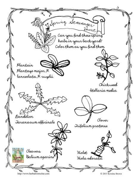 Spring Herbal Scavenger Hunt for Kids // by Herbal Roots