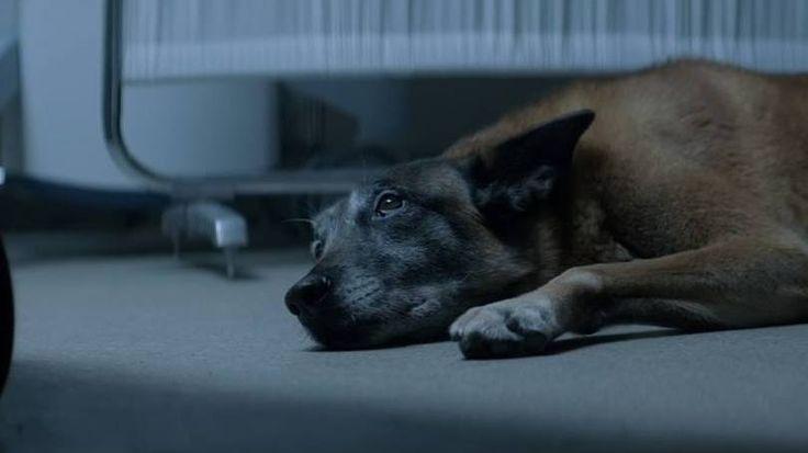 Marketing da Compaixão  Cachorro emociona o mundo em campanha sobre abandono animal