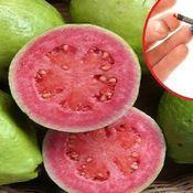 Guava-Diabete e colesterolo: solo questo frutto può curarli