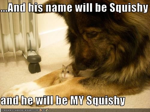 SQUISHY: Mice, Animal Friendship, Cat, Couple Pics, Guard Dogs, Amazing Animal, Funny Animal, So Sweet, Big Dogs