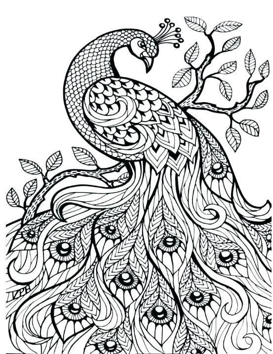 Coloring Pages For Adults Peacock Coloring Pages Mandala