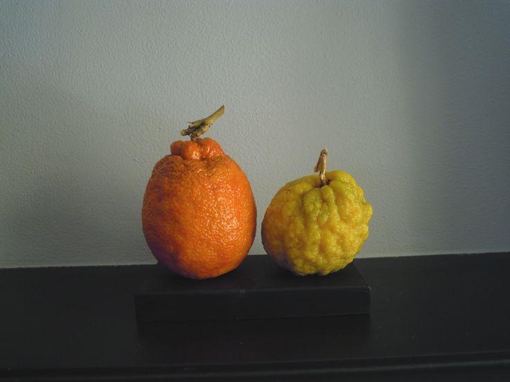 arancia e cedro