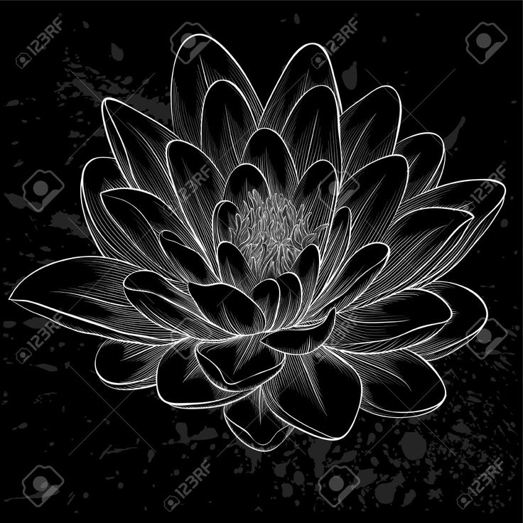 lotus blossom tattoo black - Google Search