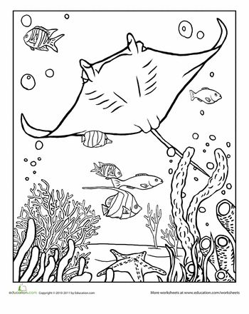 Worksheets: Manta Ray Coloring Page
