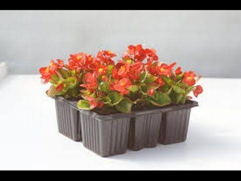 Какие цветы сеять в феврале? - YouTube