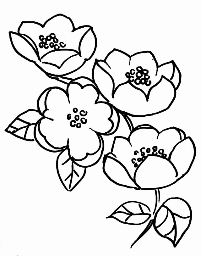 32 Cherry Blossom Coloring Page In 2020 Tree Coloring Page