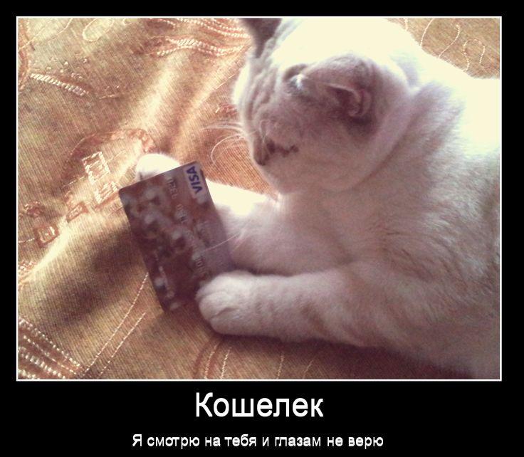 кошка Мэйси