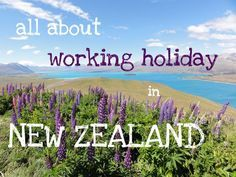 Working in New Zealand is one of the best ways to get to know the country, the culture, and save up some money for your travels. Here is some very useful information on how to apply for the working holiday visa, how to get your paper work done, how to find a job, how much will you earn, what are the expenses of living in New Zealand and much more.