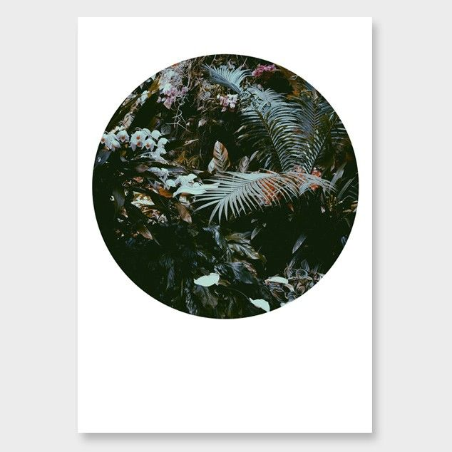 Flora Conspicua No2 Photographic Print by Amy Wybrow