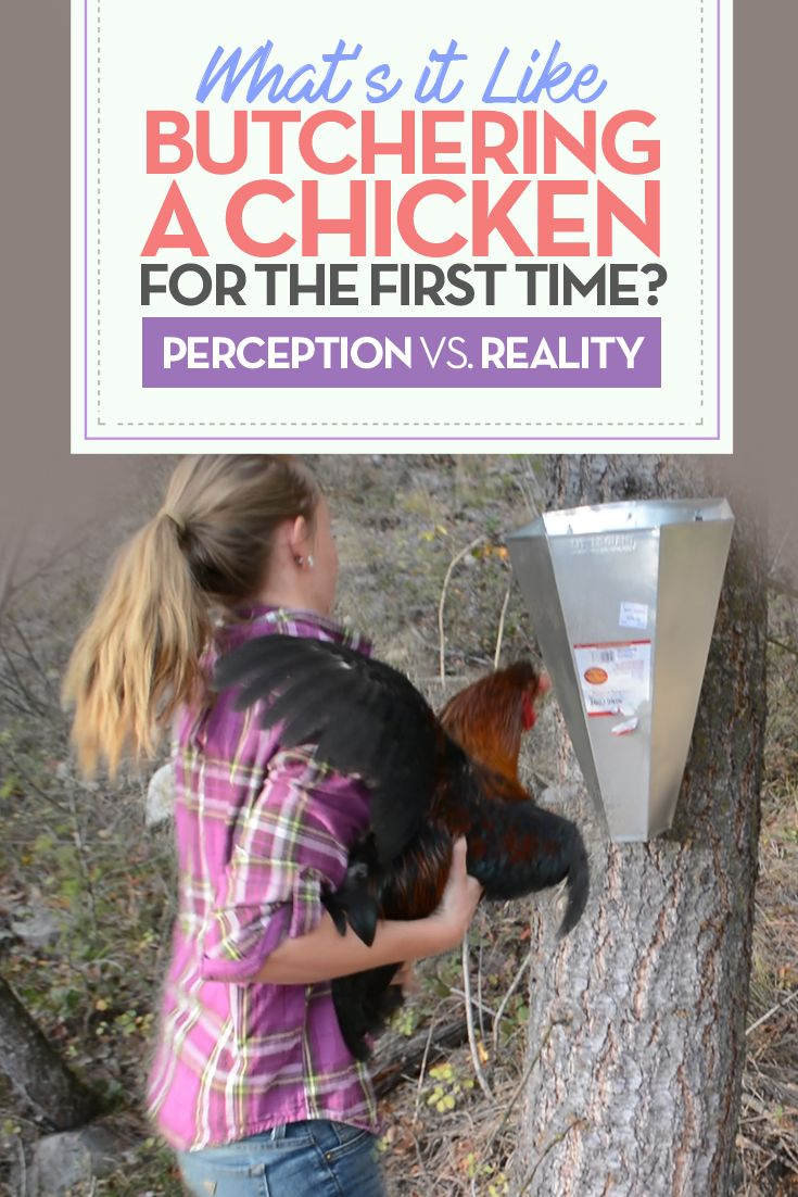 It's one thing to read about experts butchering backyard chickens, but another thing to do it yourself. What's it like for a chicken processing newbie?