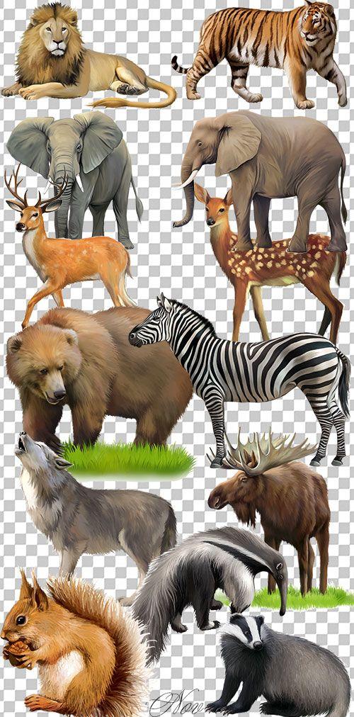 Клипарт - Рисованный животный мир на прозрачном фоне