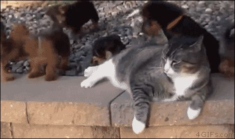 Pin for Later: 14 Freakin' Hilarious GIFs of Animals Being Jerks Ugh, young ones.