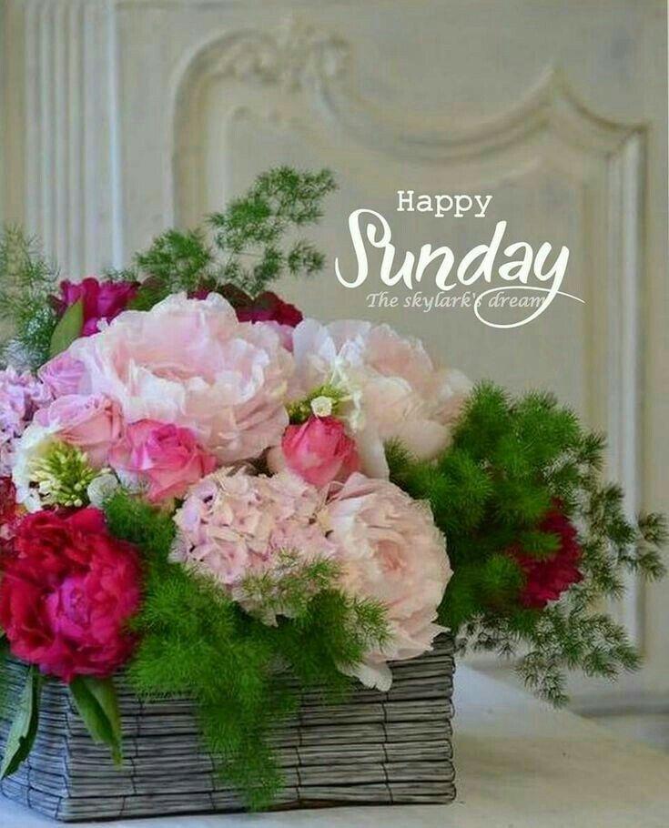 Happy Sunday Greetings Goodmorning Sunday Greetings Good