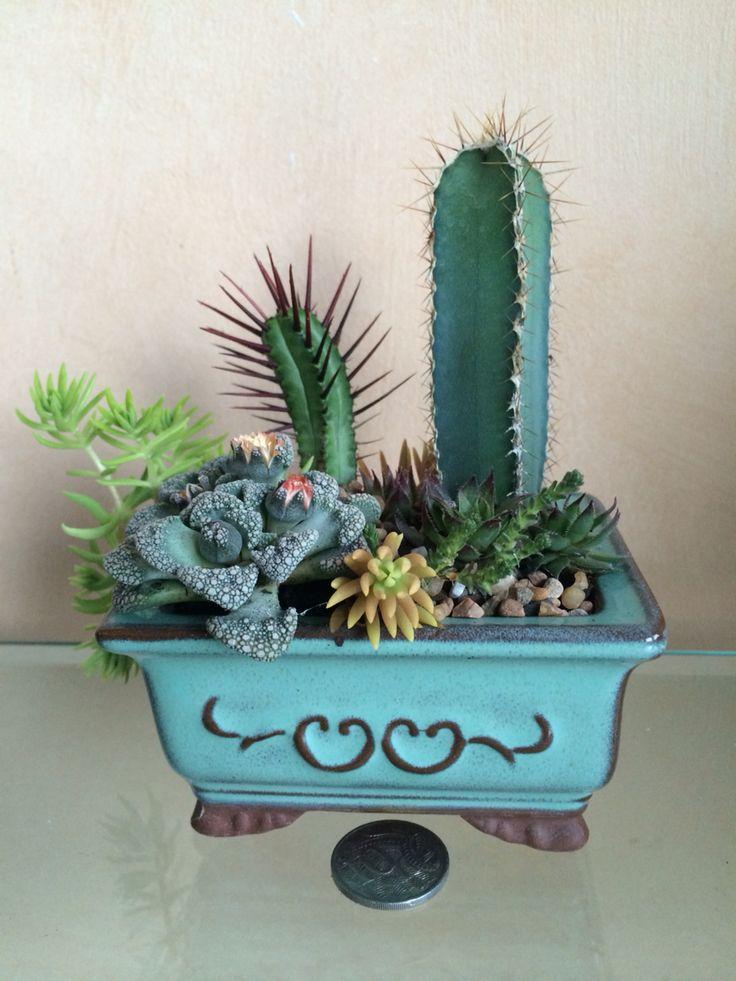 Little succulent pot