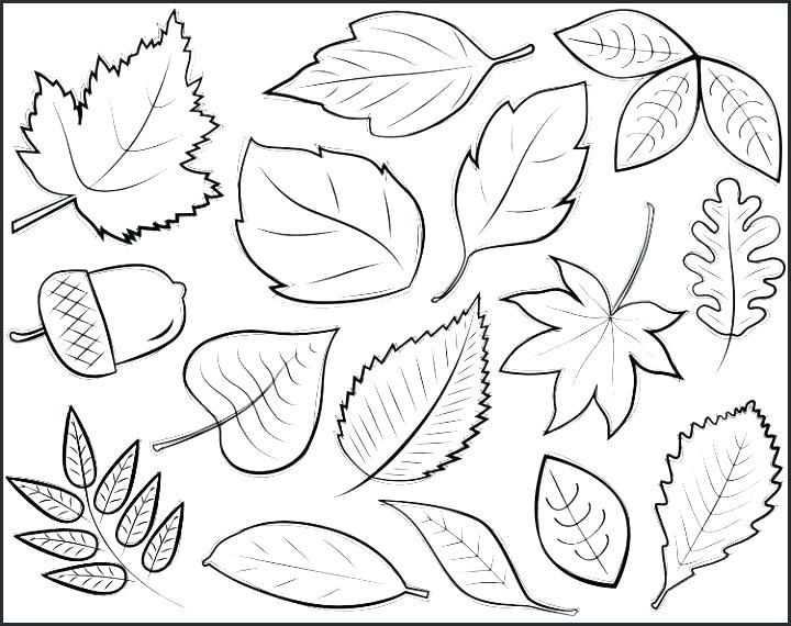 Image Result For Line Art Fall Leaves Simple With Images Fall