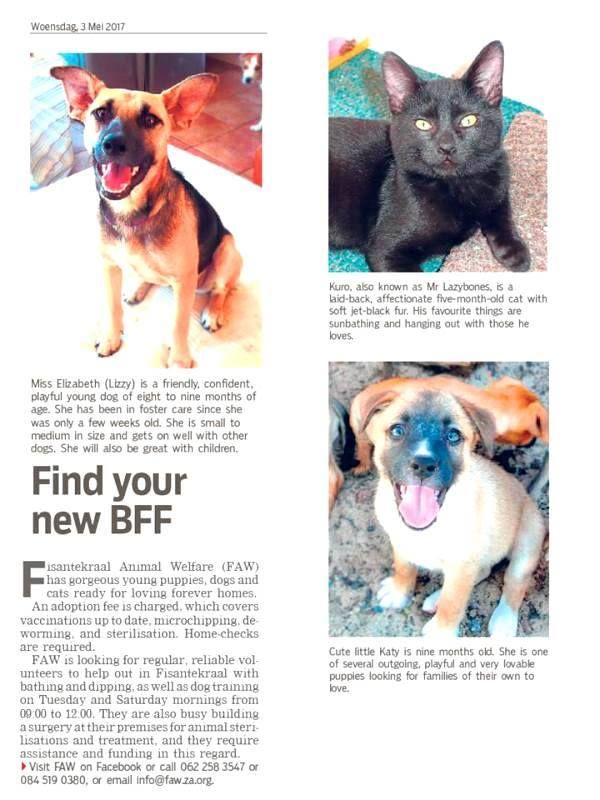 Thank you TygerBurger for featuring 3 of our gorgeous FAWbies in today's issue!  (And, yes, you see right: Lizzie is STILL waiting!)  Please contact us if you'd like to adopt: info@faw.za.org / 062 258 3547