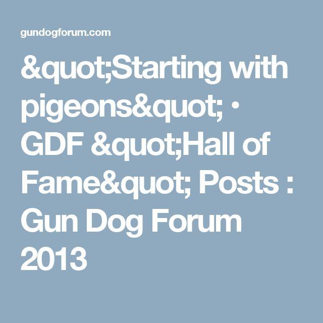 """Starting with pigeons""   • GDF ""Hall of Fame"" Posts : Gun Dog Forum 2013"