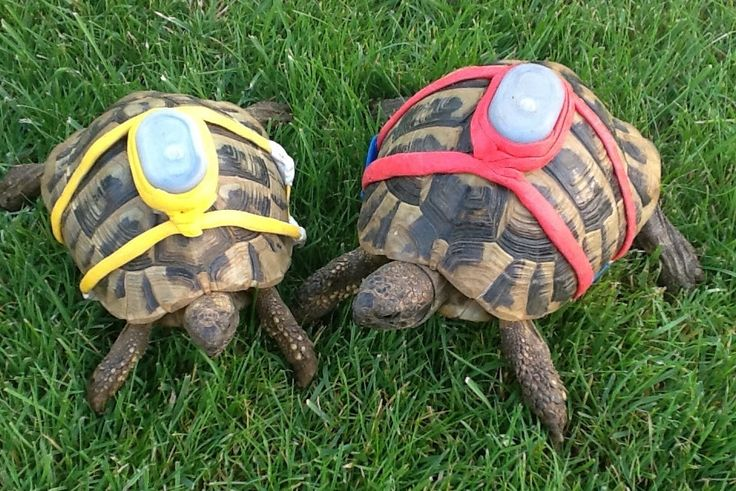 DIY Sugru Tortoise Tracker - a great way to keep track of your tortoises, especially if your yard isn't fenced! PetDIYs.com