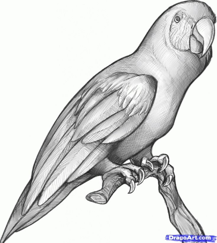 Сердечками картинки, картинки попугаев для срисовки
