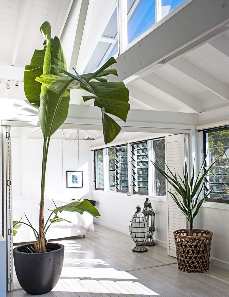 Jamie's beach house renovation:Glass louvres allow fresh sea breezes to flow into the master bedroom, alleviating the need for airconditioning. Plants break up the black and white palette.