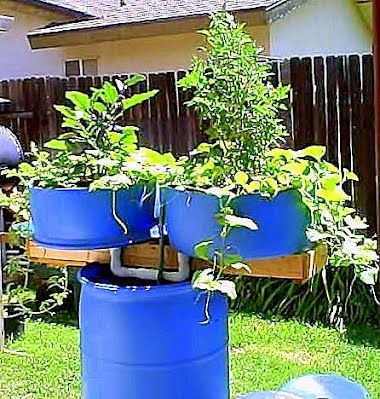 17 best images about hydroponics and aquaponiccs on for Koi pond hydroponics