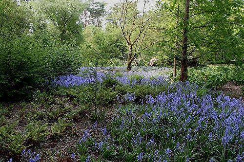 Borkrijks Arboretum: Park Beautifulplaces, Favorite Pins, Arboretum Travel And Places, Places Pinterest, Borkrijks Arboretum, Interior Travel And Places