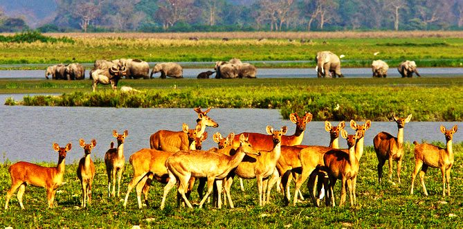 Kaziranga National Park resides at an edge of the Eastern Himalayan is located in the Golaghat and Nagaon district of Assam. The park lies in the flood plains of Brahmaputra River so the wildlife gets affected by it & this becomes the perfect reason to get the chances of visibility of diversified species. So explore the wildlife of Kaziranga National park by including it in the list of places to visit in India in February.