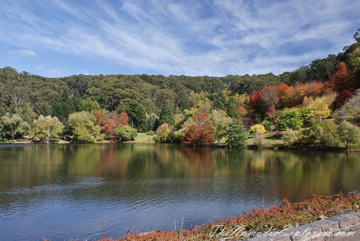 Autumn at Mount Lofty Botanic Garden, Adelaide, South Australia