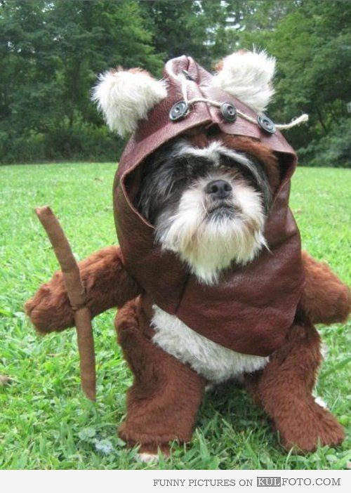 Ewok dog - Funny dog dressed in a costume of Ewok from Star Wars.