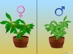 Make a Medical Marijuana Oil Step 1.jpg