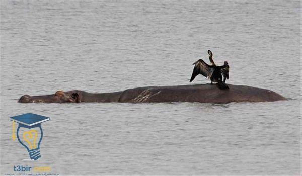 موضوع تعبير عن نهر النيل بالعناصر للصف الرابع الابتدائي 3 Animals Walrus Whale