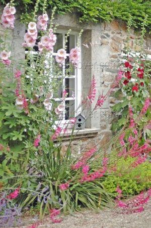 Hollyhocks ~ cottage garden by jana