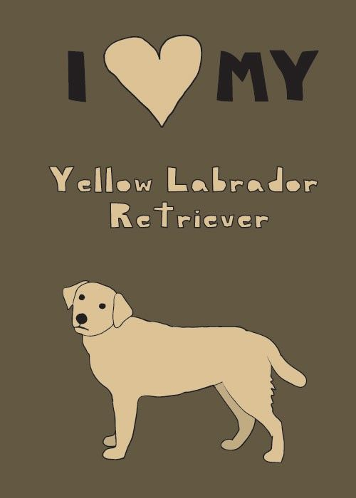 What to include in my essay on labradors?