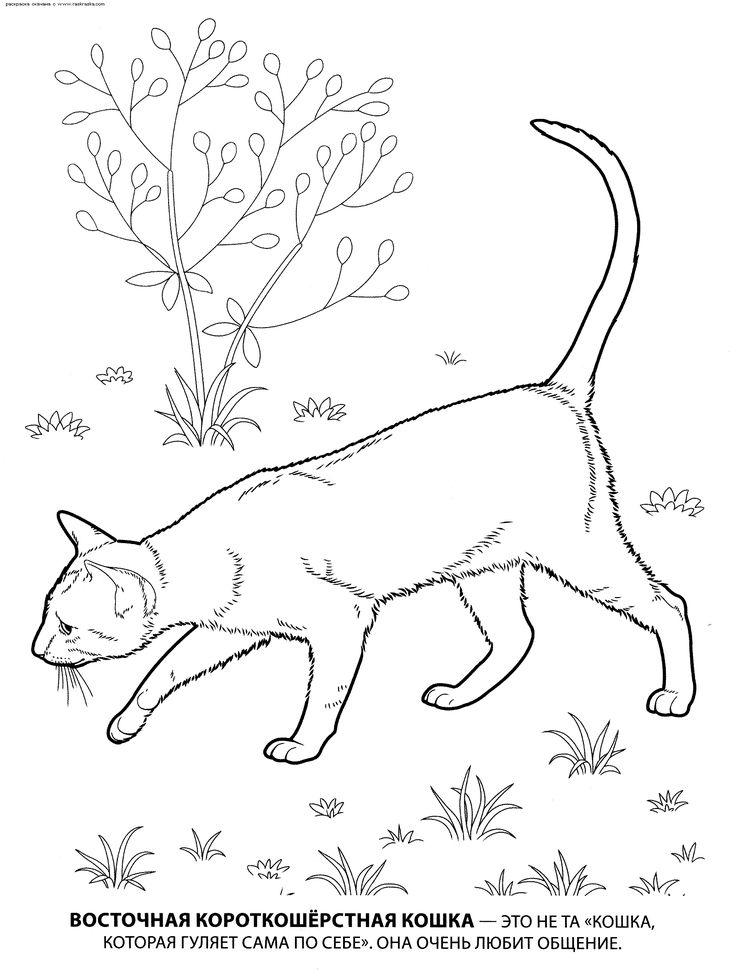 Free Coloring Pages Of Dogs And Cats : 66 best color: cats & dogs images on pinterest