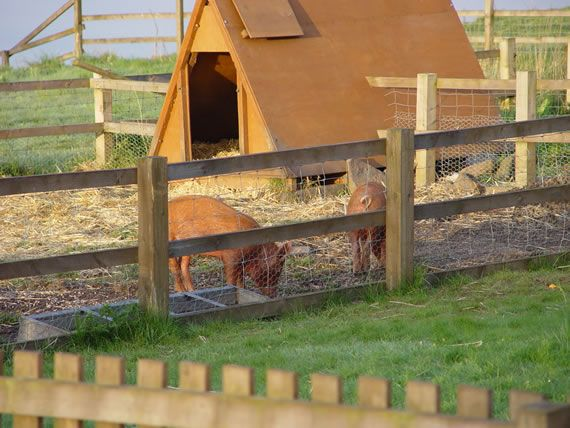 this kind of fencing would be great for the new potbellied pig area
