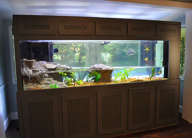 9 best images about fish tanks on pinterest fitness for Predator fish tank