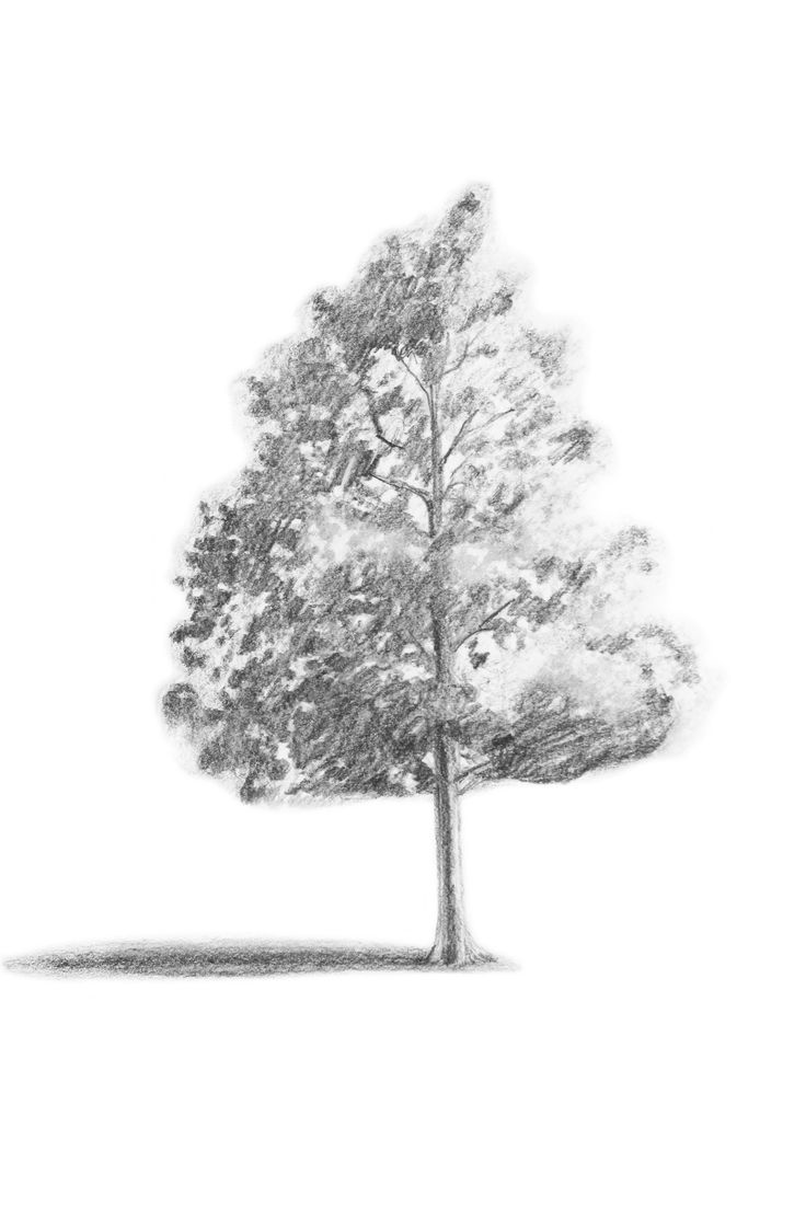 Join Craftsy instructor Catherine V. Holmes right here on the blog for a special guest tutorial! Learn how to draw trees with realistic shading and shaping.