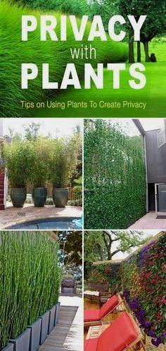 Privacy is a big concern in our gardens. None of us want to build a ten foot wall all around our property, but fortunately, there is a better way. Privacy with plants! Use these great ideas to give…MoreMore #LandscapingIdeas